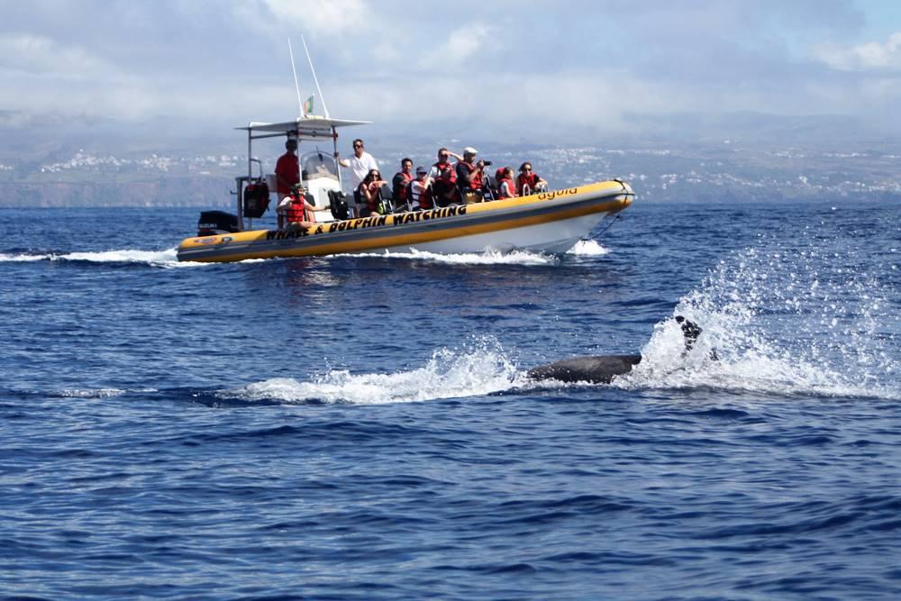 isabel-c-atlantida-verano-2016-delfines-en-azores