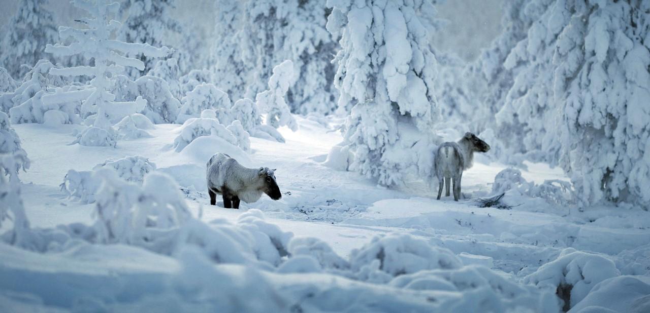 navidad-arctic-circle-vacaciones-monoparentales